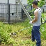 6月草刈り